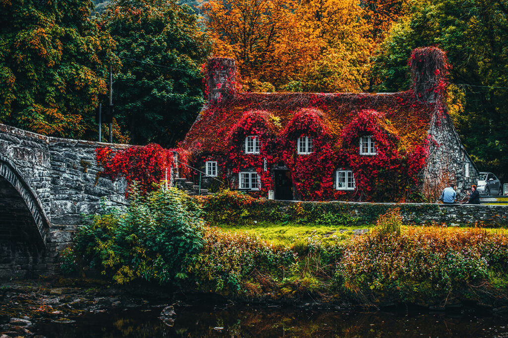 An exterior shot of an ivy covered home in autumn